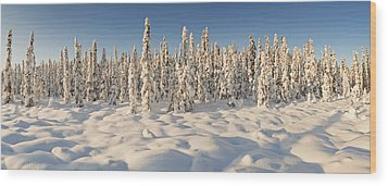 Panoramic View Of Snow-covered Spruce Wood Print by Ray Bulson