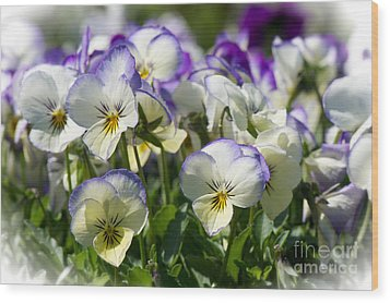 Pansies In Loomis Wood Print by Vinnie Oakes