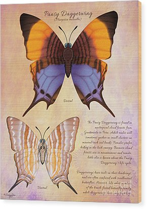 Pansy Daggerwing Butterfly Wood Print by Tammy Yee