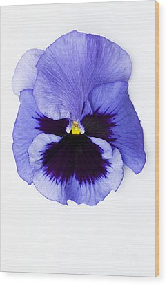 Pansy Face Wood Print by Anne Gilbert