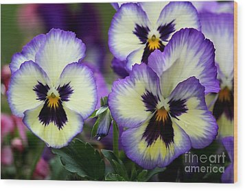 Pansy Faces Wood Print by Theresa Willingham