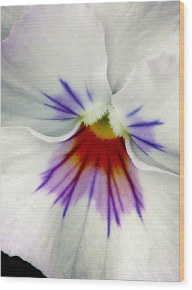 Pansy Flower 11 Wood Print