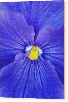 Pansy Flower 37 Wood Print