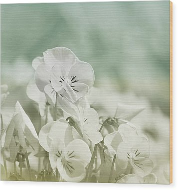 Pansy Flowers Wood Print by Kim Hojnacki