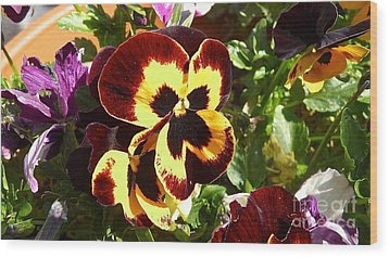 Pansy Time Wood Print by Julie Koretz