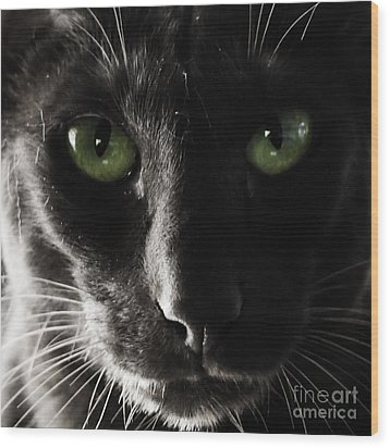 Panther Eyes Wood Print by Michael Canning
