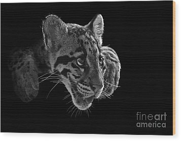 Panting Beauty Wood Print by Ashley Vincent