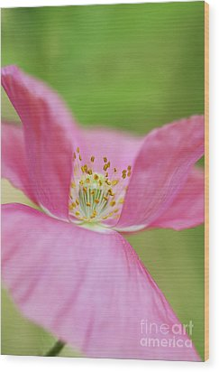 Papaver Rhoeas Shirley Poppy Wood Print by Tim Gainey