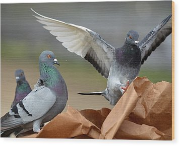 Paper Bag Pigeons 3 Wood Print by Fraida Gutovich