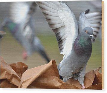 Paper Bag Pigeons Wood Print by Fraida Gutovich