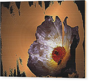 Paper Flower Wood Print by Irma BACKELANT GALLERIES