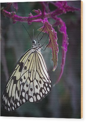 Paper Kite   Wood Print by Shirley Mitchell