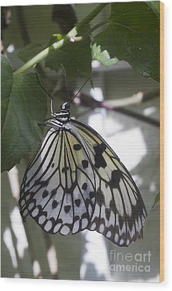 Paper Kite Wood Print by Anne Rodkin