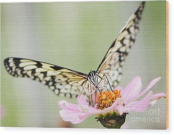 Paper Kite Butterfly On Zinnia Wood Print by Oscar Gutierrez