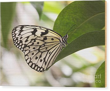 Wood Print featuring the photograph Paper Kite On A Leaf by Ruth Jolly