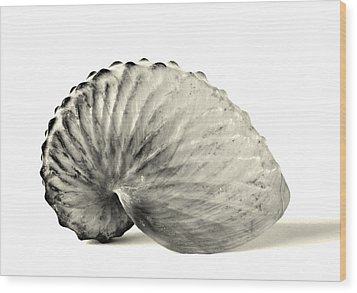 Paper Nautilus Shell Wood Print
