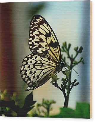 Paperkite Butterfly Wood Print