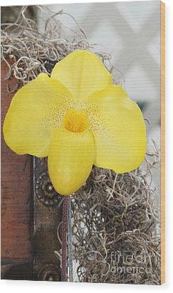 Paphiopedilum Fumis Gold Wood Print