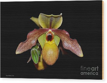 Wood Print featuring the photograph Paphiopedilum 'summer Ice' Orchid by Susan Wiedmann