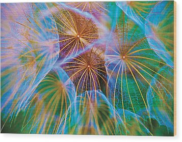 Parachute Time Wood Print by David Davies