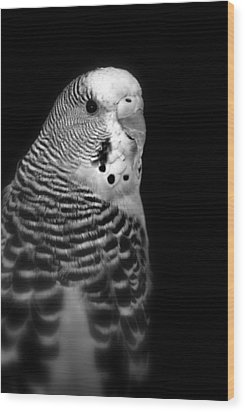 Parakeet Wood Print by Nathan Abbott