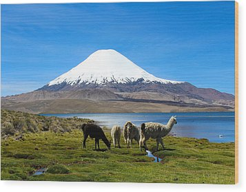 Parinacota Volcano Lake Chungara Chile Wood Print