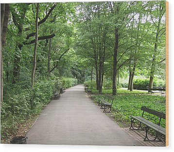 Park Bench Poland Wood Print by Nora Boghossian