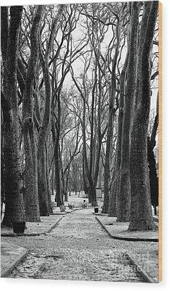 Park Path Wood Print by John Rizzuto
