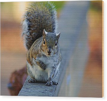 Wood Print featuring the photograph Park Squirrel I by Daniel Woodrum