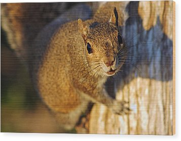 Wood Print featuring the photograph Park Squirrel II by Daniel Woodrum