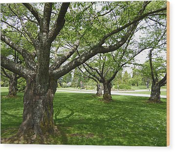 Wood Print featuring the photograph Park Trees by Laurie Tsemak