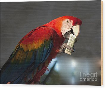 Wood Print featuring the photograph Parrot Eating 1 Dollar Bank Note by Gunter Nezhoda