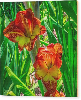 Wood Print featuring the photograph Parrot Gladiolus by Rob Sellers