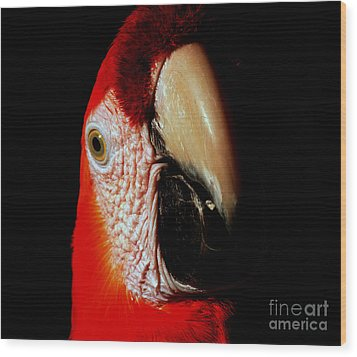Wood Print featuring the photograph Parrot by Gunter Nezhoda