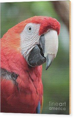 Parrot Profile Wood Print by Carol Groenen