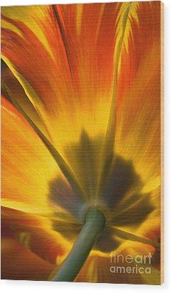 Parrot Tulip - D008405 Wood Print by Daniel Dempster