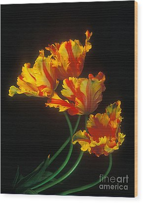 Parrot Tulips On Easter Morning Vertical Wood Print