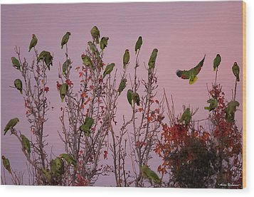 Parrots At Roost Wood Print