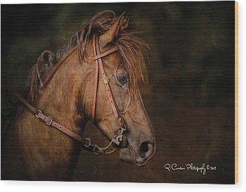 Paso Fino Portrait Wood Print