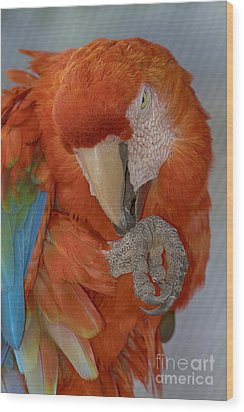Pass The Hand Lotion Please Wood Print by Anne Rodkin