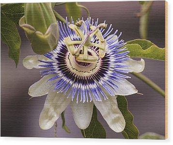 Passiflora Caerulea Wood Print by Caitlyn  Grasso