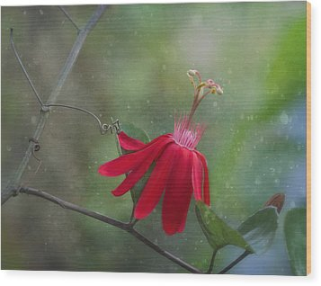 Passiflora Flower Wood Print by Kim Hojnacki