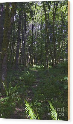 Passing Ferns  Wood Print by Tim Rice