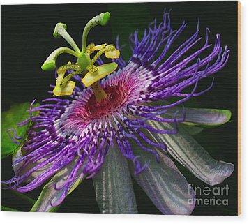 Passion Flower Wood Print by Douglas Stucky