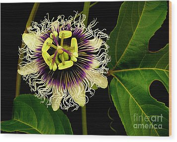 Passion Flower Wood Print by James Temple