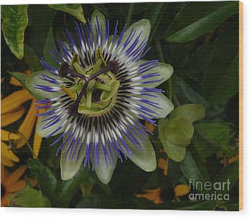 Wood Print featuring the photograph Passion Flower by Jane Ford