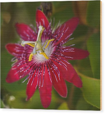 Wood Print featuring the photograph Passion Flower by Jane Luxton