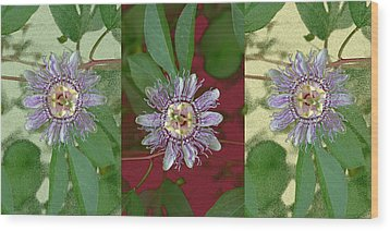 Passion Flower Triptych Wood Print by Tom Wurl