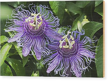 Passion Flowers Wood Print