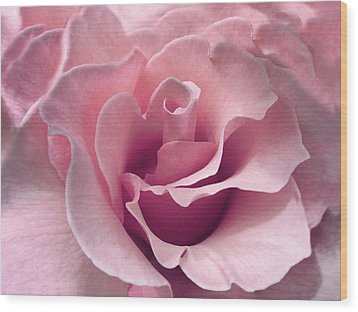 Passion Pink Rose Flower Wood Print by Jennie Marie Schell